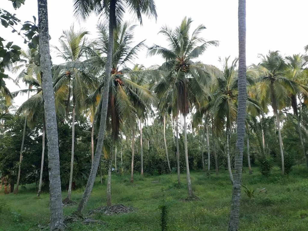 Coconut | Categories | | Space Real Estate Brokers