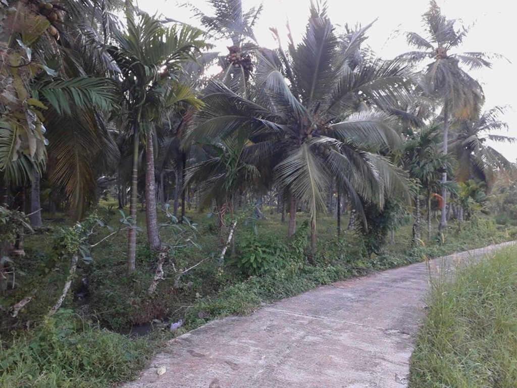 Coconut   Categories     Space Real Estate Brokers  coconutlands lk
